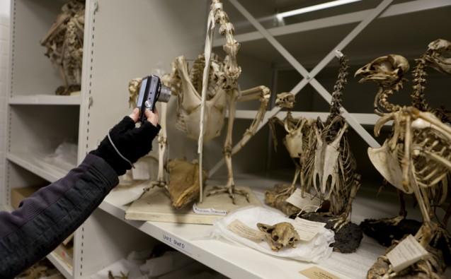 bone archives